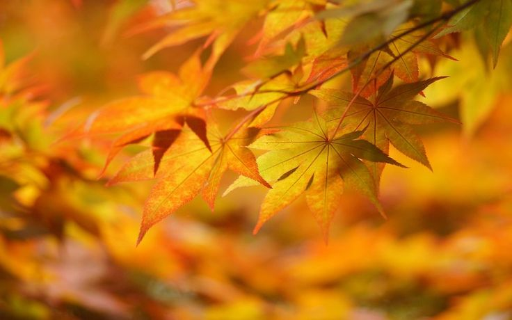 otoño, hojas, fondos de pantalla, wallpaper wallpaper | Tardor ...