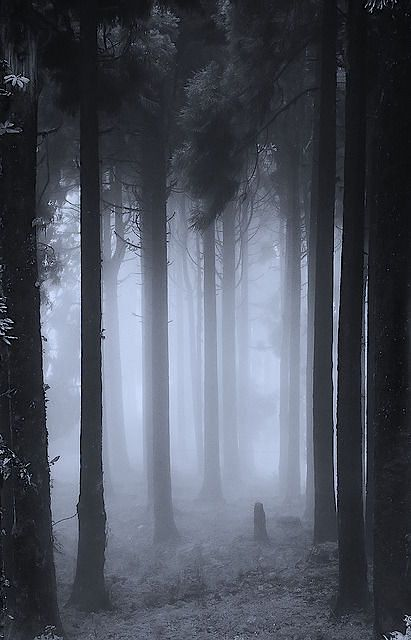 "Foggy forest - maybe if we had evergreens it would look less ""pretty spring"" and more creepy"