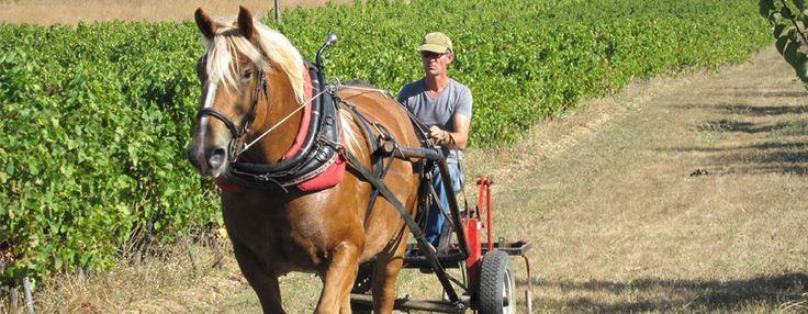Julien de Rennes : Domaine Peyres Roses - ASTRID ET OLIVIER BONNAFONT #Vigneron - Des vignerons comme on les aime à Brin de Cocagne - chambre d'hôtes écologique de charme dans le Tarn près d'Albi - Brin de Cocagne