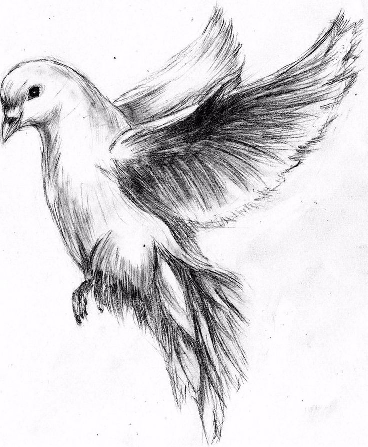 flying dove pencil drawing - photo #3
