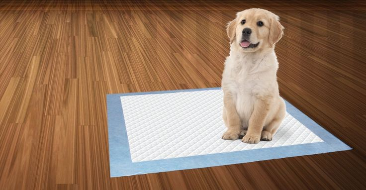 Disposable Pet Training Pads ** More info could be found at the image url.