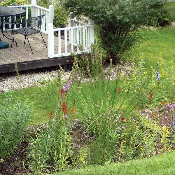 landscaping a yard with poor drainage | Common Lawn Problems and How to Fix Them