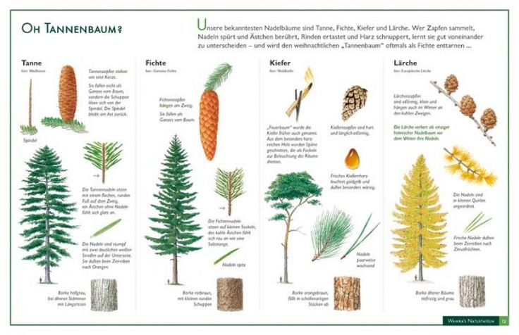 25 beste idee n over pflanzen erkennen op pinterest b ume erkennen natuurjacht en baum ohne. Black Bedroom Furniture Sets. Home Design Ideas