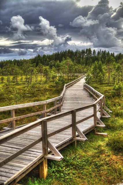 Pathway through a mire in Seitseminen #National #Park, #Finland