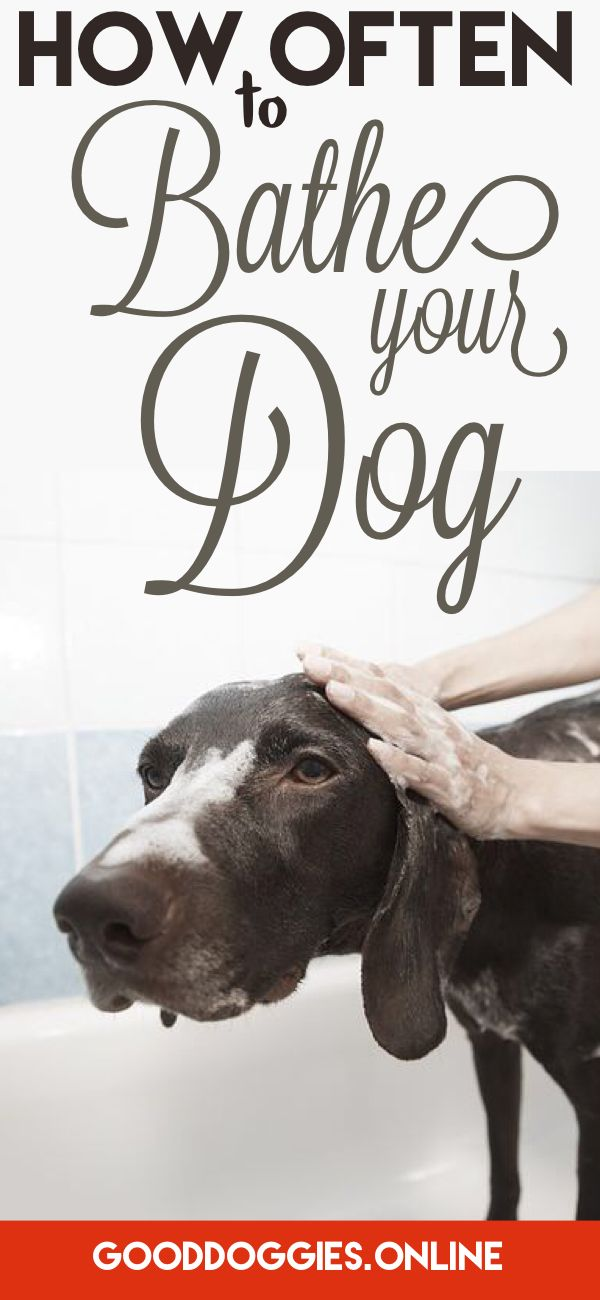 Learn about when you should give Dog a bath.
