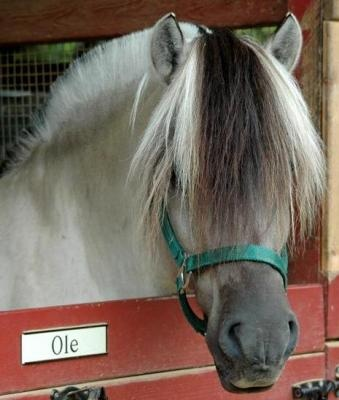 113 best fjord horse images on pinterest fjord horse beautiful horses and pretty horses - The house on the rock the ultimate refuge in a norwegian fjord ...