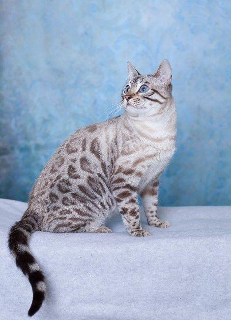 Predator Dick Cat looks shaved in spots