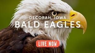 explore.org links to live cams, films and photos of animals in their natural habitats.