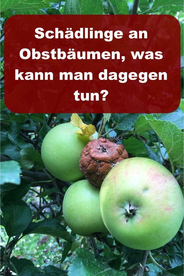 Wie Schutzt Man Obstbaume Gegen Schadlinge Gartenbob De Der Garten Ratgeber Schadlinge Im Garten Schadlinge Obst