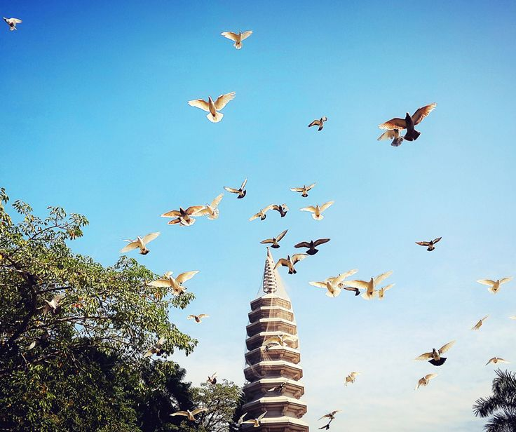 Birds flying over Nanputuo Temple in Xiamen, Fujian province. Check our travel guide
