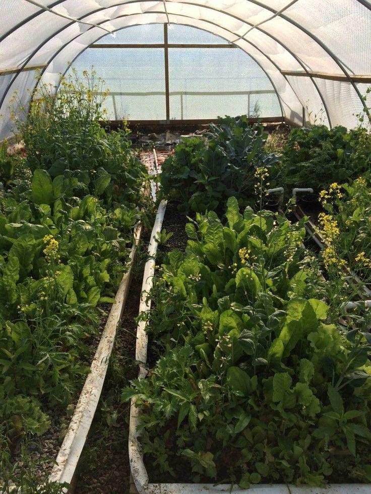 Incredible veggies with duckponics creative living for Garden pool doomsday preppers
