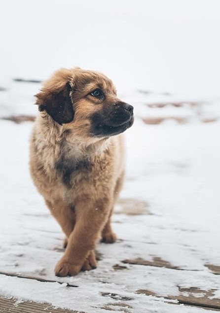 This puppy is so cute! It looks like a model dog lol