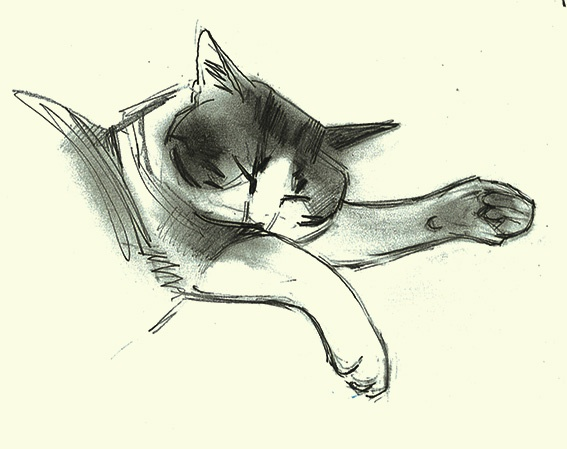 Line Drawing In Html : 571 best draw women cats images on pinterest cat illustrations