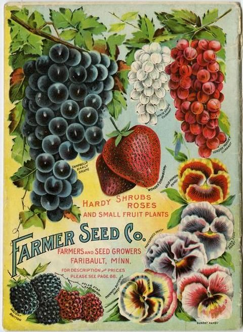 Pansies G Currants And Berries Are Beautifully Colorfully Arrayed On The Back Cover Of 1907 Catalog From Farmer Seed Nursery Co
