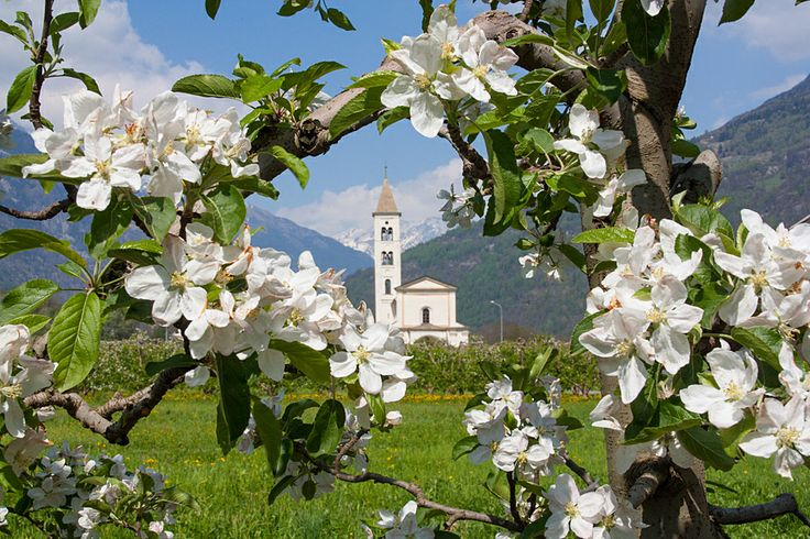 #Valtellina in fiore