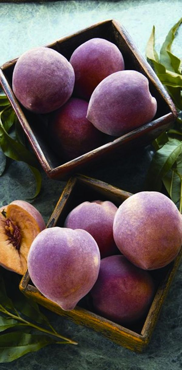 Growing Fruit Trees From Seeds - You can save big bucks growing peaches, apricots and nectarines from seeds.