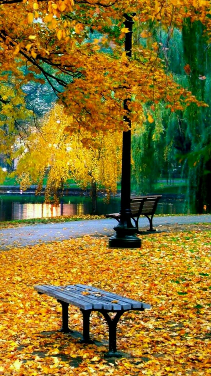 1349 best Autumn images on Pinterest | Seasons of the year ...