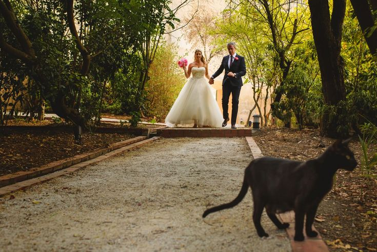 Father and bride walking down the aisle. A black kitty wishes them luck. Wedding dress by Private Lable by G. Cake & Confetti Weddings. Photo by Quemcasaquerfotos