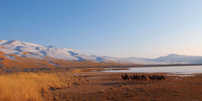 A hiking tour cross the Badain Jaran desert with camals and local guides.
