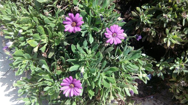 De color lila...