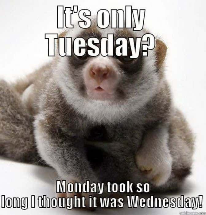 20 Tuesday Memes To Help Get You Through The Day Work Quotes Funny Fun Quotes Funny Work Humor
