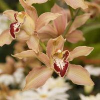 Oito dicas para melhorar o cultivo de orquídeas - Jardinagem - iG