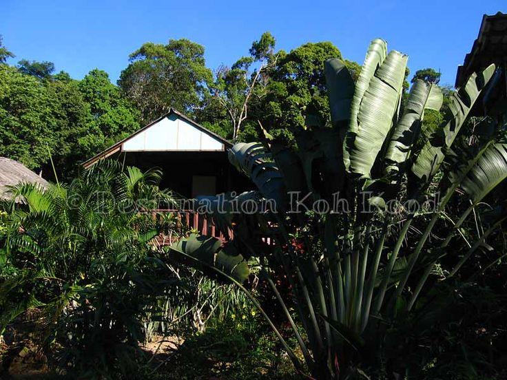 Lush tropical garden @ Jimmy Hut (Koh Kood, Thailand)
