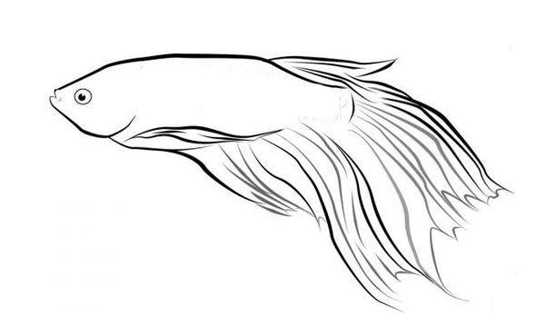 Free Premium Templates Fish Sketch Animal Templates Fish Art