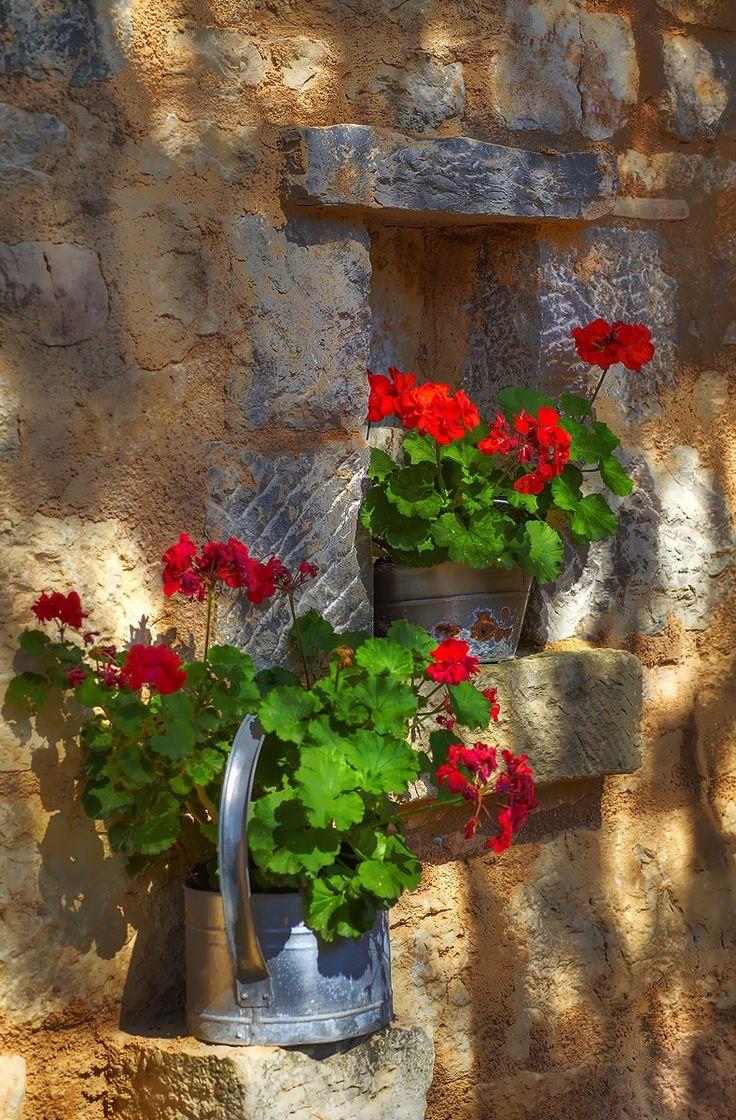 Dalmatian Ethno Village Red geraniums, Geraniums