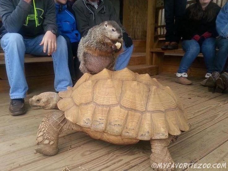 Live animal birthday parites, mobile petting zoo