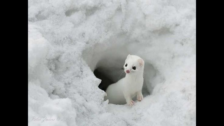 Top Ten The Cutest and Beautiful Small Animals in the world