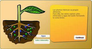Colegio José Calderón: La fotosintesis