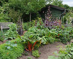 Beipflanzung in der Mischkultur
