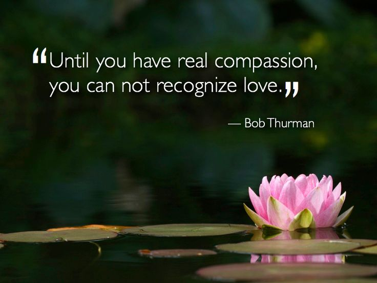 Compassion Quotes 16 Best Compassion Images On Pinterest  Compassion Quotes Inspire