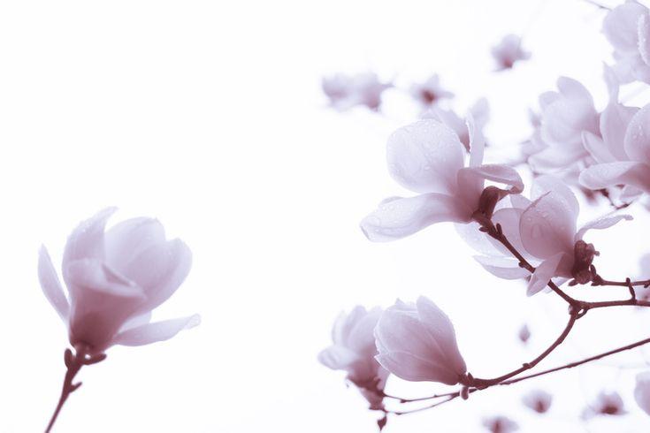 [NX30] Flowers