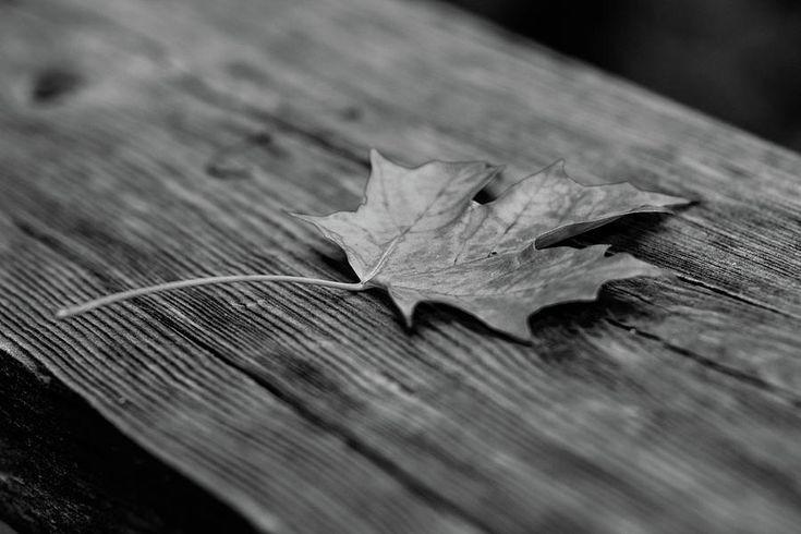 Olga Olay Photograph - Last Performance Of Maple Leaf by Olga Olay #OlgaOlayFineArtPhotography #ArtForHome #FineArtPrints #Fall #Homedecor