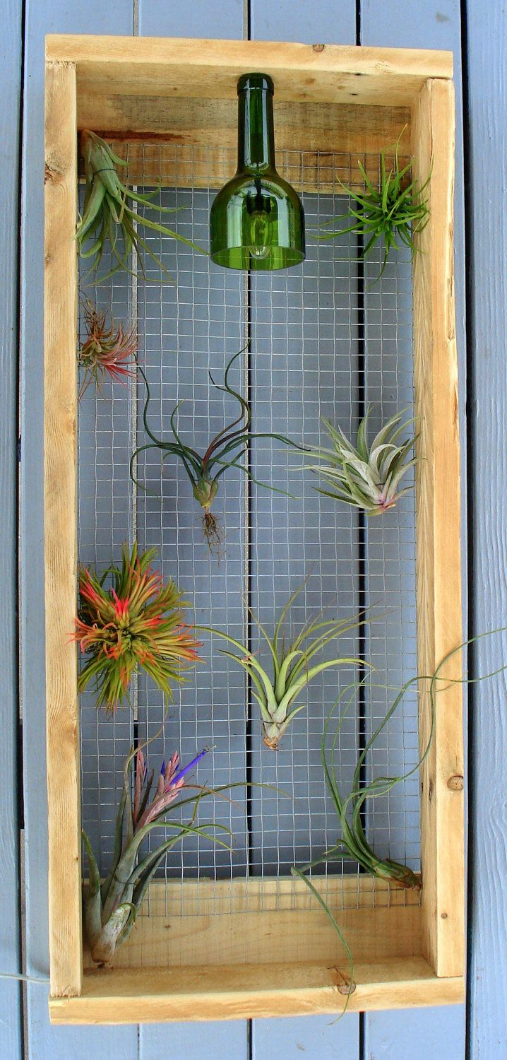 79 best epiphyte images on pinterest air plants inside for Air plant art