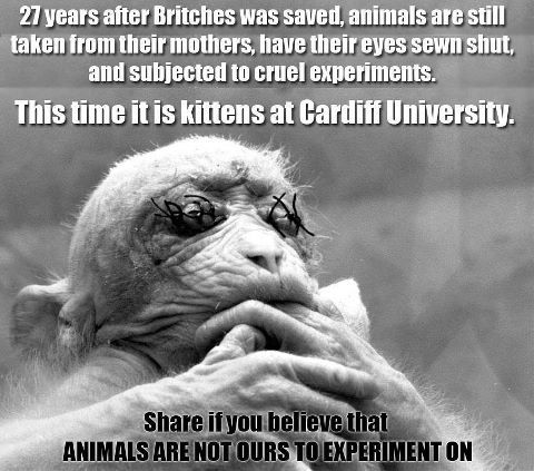 SHAME on Cardiff University! And SHAME on human beings for allowing this to happen!