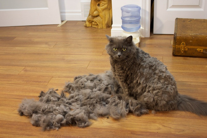 how to get cat hair out of brush