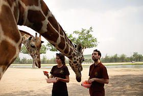 Safari Park Volunteers