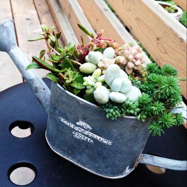 ウッドデッキ/IKEA/多肉植物/植物/玄関/入り口のインテリア実例 - 2014-06-23 18:58:55   RoomClip(ルームクリップ)