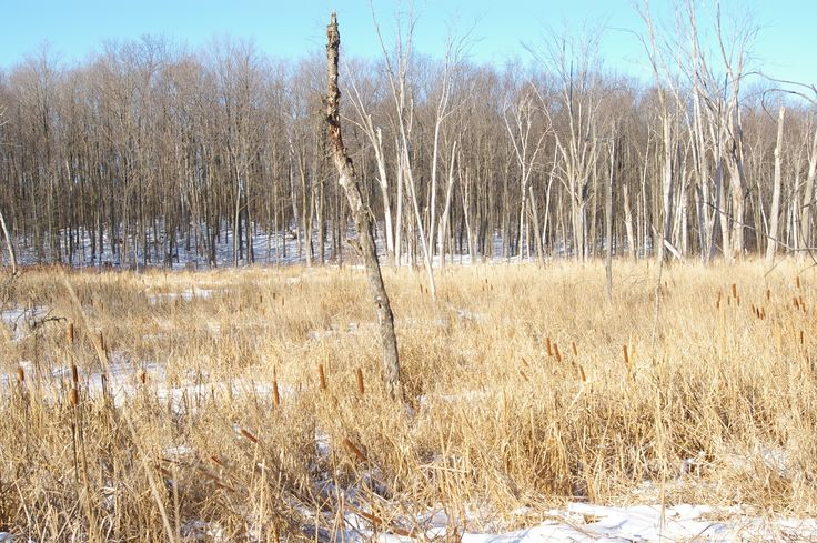 Regional Forest Tract - wetlands
