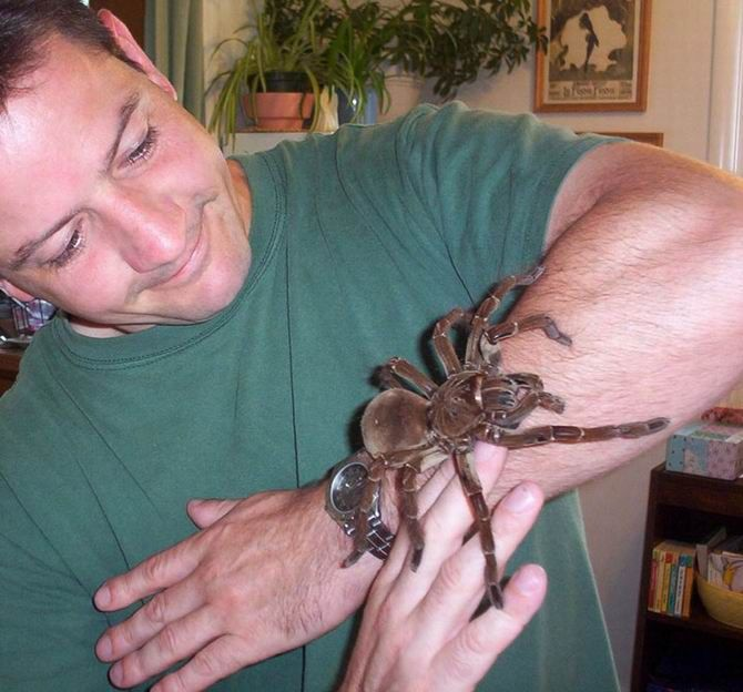 4. L'araignée de mer du Japon : 19 kilos et Une tarentule de plus de 30 cm d'envergure
