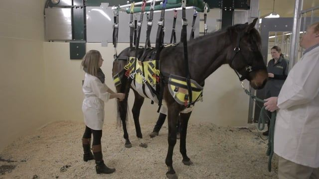 A team of researchers has partnered with RMD Engineering, a local Saskatoon engineering and manufacturing company, to design and build a one-of-a-kind robotic lift system for horses. The lift will help rehabilitate horses suffering from acute injuries and other musculoskeletal problems by providing mobility, weight distribution and support. The team's leader is Dr. Julia Montgomery, a large animal internal medicine specialist at the WCVM. For more information, visit…