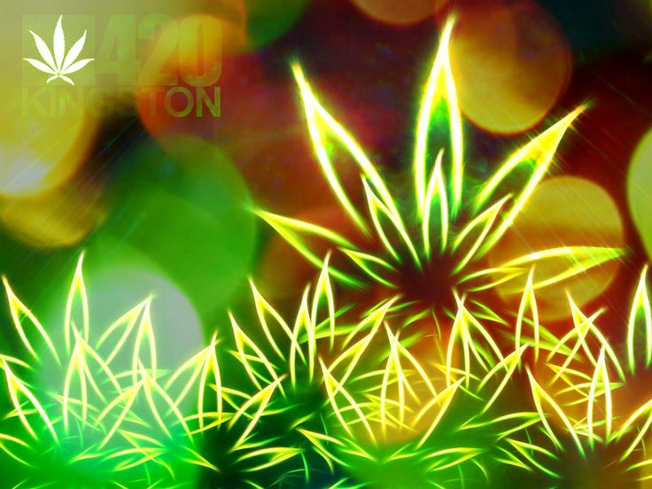 marijuana | Sparatoria alla festa della marijuana a Denver