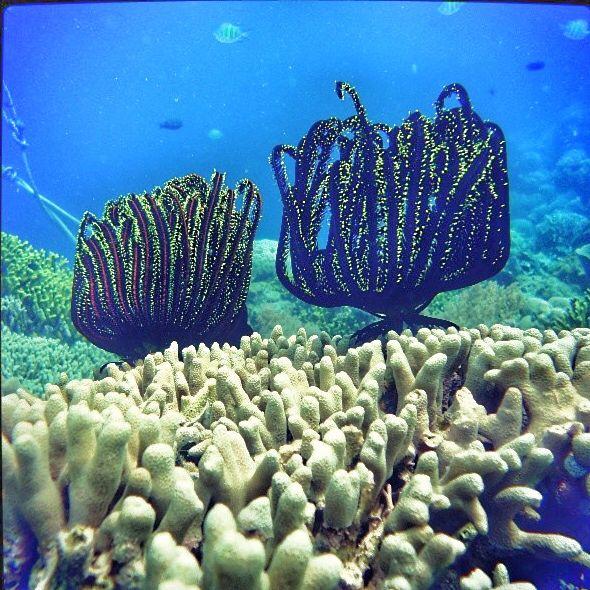 Under the sea of siladen island   #manado #underwater #siladen