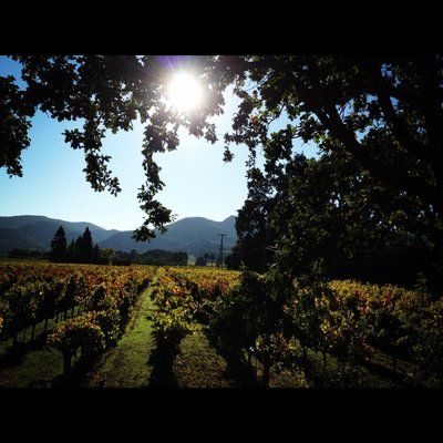 Photos for Hopper Creek Winery | Yelp. Napa Valley, CA BERRIES, WINE!! :)'s