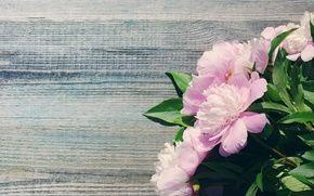Wallpaper beautiful, pink, wood, peonies, pink, bouquet, flowers, peony