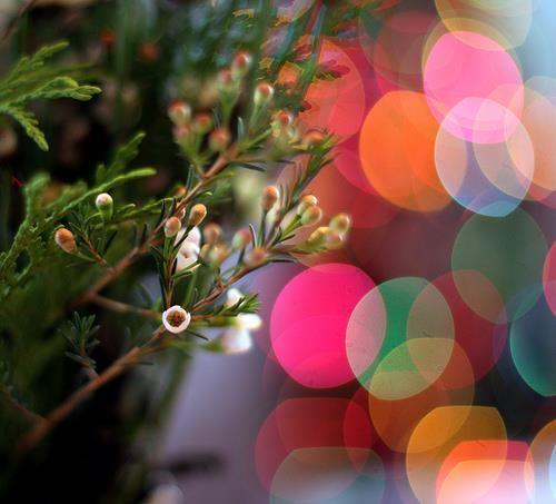 Festive Christmas Bokeh Pictures