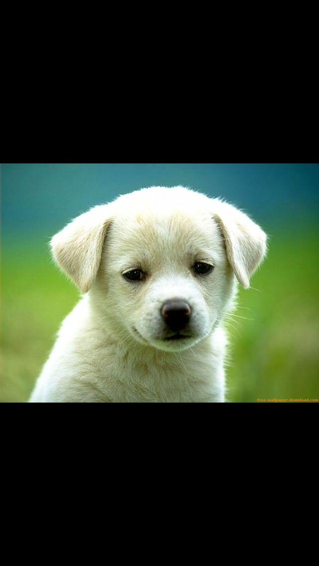 Hoy en día se abandonan muchos perros. Adopta uno y lo harás feliz